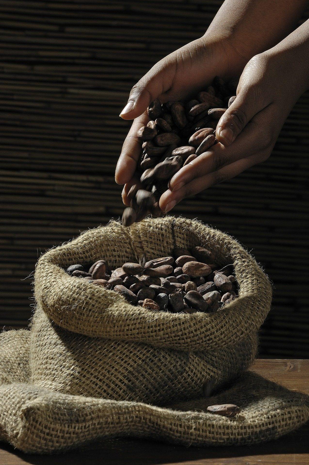 cacao-beans-swissmade-direct