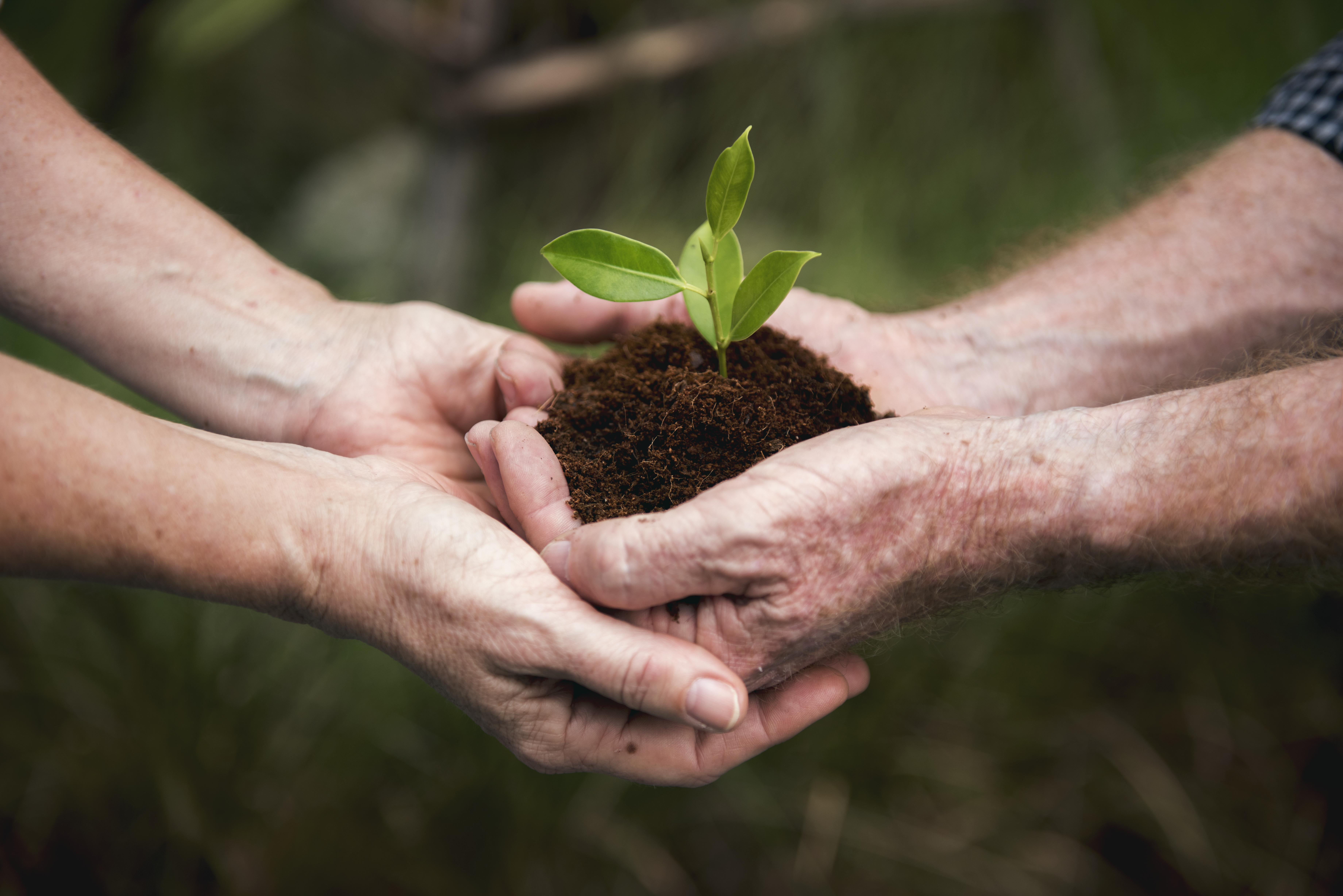 sustainability-and-the-environment